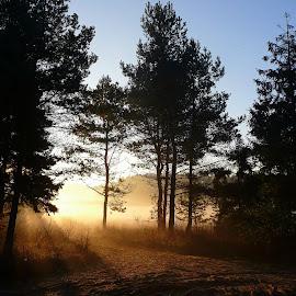 golden mist II by Marta Kolczyńska - Nature Up Close Trees & Bushes