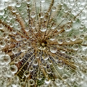 DREAM by Tanya Markova - Abstract Water Drops & Splashes ( water, nature, dream, drobs,  )