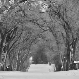 Enchanting Road by Laura Mohoi - Black & White Landscapes ( black and white, trees, landscape, roads )