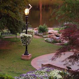 Beautiful park by Brenda Shoemake - City,  Street & Park  Vistas