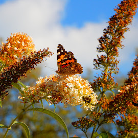 Butterfly 3 by Kristine Nicholas - Novices Only Flowers & Plants ( clouds, orange, macro, nature, bugs, butterflies, blue, green, nature up close, bug, flowers, insects, insect, flower,  )