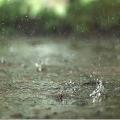 App Real Rain Live Wallpaper APK for Windows Phone