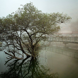Taiwan tree by Linda Stander - City,  Street & Park  City Parks ( water, morning mist, tree, reflections, bridge, mist )
