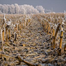 by Nenad Milic - Landscapes Prairies, Meadows & Fields (  )