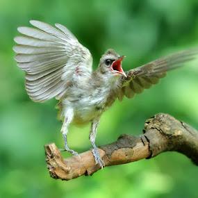 call a friend by Yan Abimanyu - Animals Birds