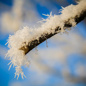 First snow... by Éric Senterre - Nature Up Close Trees & Bushes ( snow flake tree )
