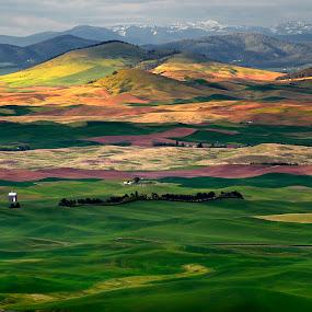 Palouse, WA by Peter Cheung - Landscapes Mountains & Hills ( palouse )
