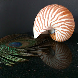 shell by Janette Ho - Artistic Objects Still Life