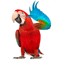App Real Talking Parrot version 2015 APK