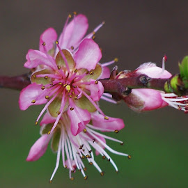 Blossoms by Sarah Harding - Novices Only Flowers & Plants ( plant, nature, novices only, garden, flower )