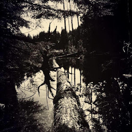 Creepy swamp pic ❤️ by Amber Miner - Instagram & Mobile iPhone