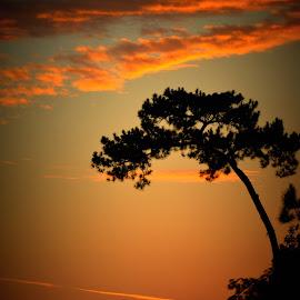 Dr. Suess Tree by Rhonda Kay - Nature Up Close Trees & Bushes