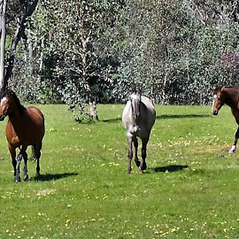 Horses by Sarah Harding - Novices Only Pets ( animals, horses, outdoors, pets, novices only )