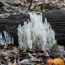 Coral Fungus Cathedral by Cathi Duck - Nature Up Close Mushrooms & Fungi ( fungus, white, cathedral )