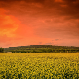 by Dragan Rakocevic - Landscapes Prairies, Meadows & Fields ( orange, red, sky, meadows, yellow, landscape, woods, fields )
