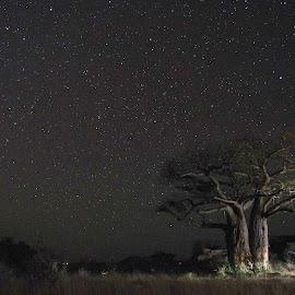 Boap Tree Under the Stars by Stefan Smit - Landscapes Prairies, Meadows & Fields ( tree, stars, bush, night, night sky, boap tree )