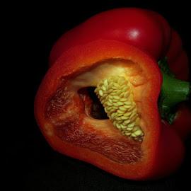RED PEPPER #1 by Karen Tucker - Food & Drink Fruits & Vegetables ( macro, arty, red, capsicum, art, seeds, pepper, sweet pepper, bell pepper, vegetable, solid background, close up )