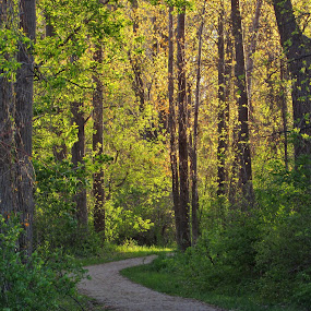 Tell Me A Story by Howard Sharper - Landscapes Forests ( landscapes, forest, pathway, sunlit, peaceful,  )