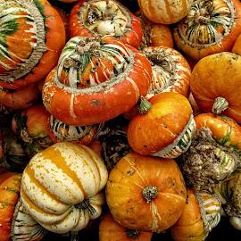 P veg 03 by Michael Moore - Food & Drink Fruits & Vegetables