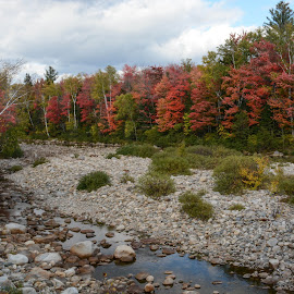 Colorful Trees by Robert Coffey - Landscapes Forests ( clouds, creek, trees, forest, rocks )