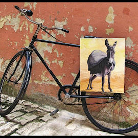 On your bike by Mandy Hedley - Transportation Bicycles ( picture, bike, donkey, street, croatia )