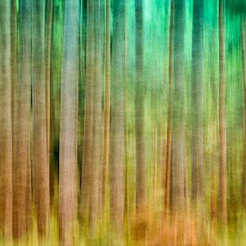 Satumetsän väreissä by Niina Hakkarainen - Abstract Patterns