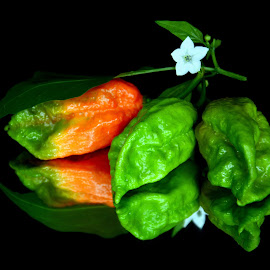 King chilli by Asif Bora - Food & Drink Ingredients (  )