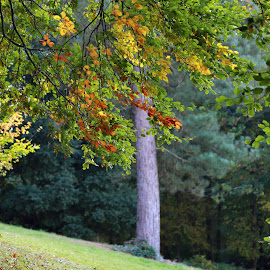 Autumn in Blenheim Palace gardens by Almas Bavcic - Nature Up Close Leaves & Grasses
