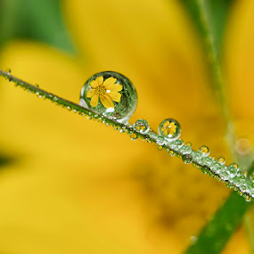 Snappy by Citra Hernadi - Nature Up Close Water