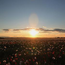 by Michal Valenta - Landscapes Sunsets & Sunrises