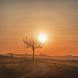 Sunset over a lonely Tree by Aleš Krivec - Landscapes Sunsets & Sunrises ( orange, tuscany, fortress, sunset, sunrays, path, castle, yellow, town, road, medieval, sun )
