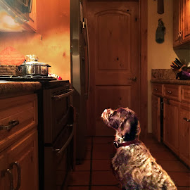 A Watched Pot Never Boils by Brian Blood - Animals - Dogs Portraits ( rockwell, truckee, kitchen, dog, animal )