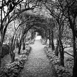 The Straight Path by Tim Davies - City,  Street & Park  Historic Districts ( path, virginia, garden, shenandoah, historic, covered )