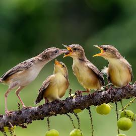 by Bernard Tjandra - Animals Birds