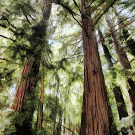 Redwood trees  picture changed to digital oil paint. by Chuck Kuhn - Digital Art Places
