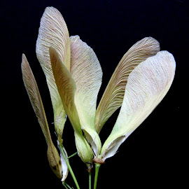 by Mohammad Tajdolati - Nature Up Close Leaves & Grasses