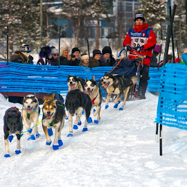 Dog Sled Rides by Stanley P. - Sports & Fitness Other Sports ( rides, sports )
