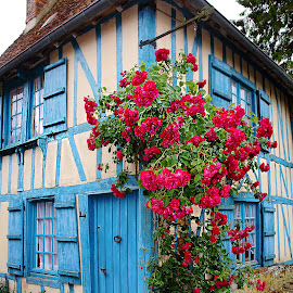 Red roses and blue house by Gérard CHATENET - City,  Street & Park  Street Scenes