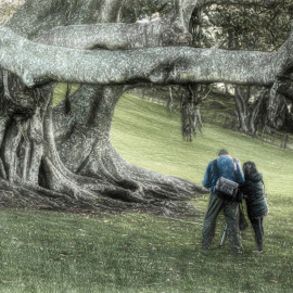 Cornwall Park by Richard Kam - City,  Street & Park  City Parks ( tourist, one tree hill, auckland, painterly effect, trees, cornwall park, new zealand )