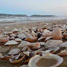 sea shells by Mariska Brink - Nature Up Close Other Natural Objects ( clams )
