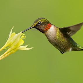 by Mircea Costina - Animals Birds