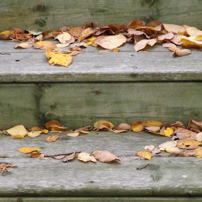 Stairs in Autumn by Barbara Storey - Buildings & Architecture Other Exteriors ( stairs, fall colors, autumn, still life, fall, steps, leaves )