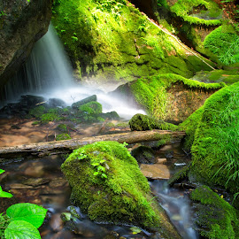 Deep In The Forest by Kim Wilhite - Landscapes Forests ( indiana, stream, nature, waterfall, moss, forest, landscape )