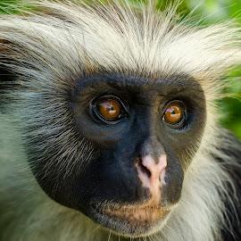 by Cassandra G - Animals Other Mammals ( primates )