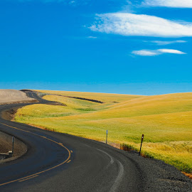 Sometimes the Grass is Greener by Jodie Lindbo - Landscapes Prairies, Meadows & Fields ( winding road, blue sky, highway, country, fields )