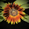 Sunflower and leavesG.png