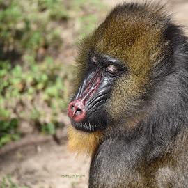 by Jim Pruett - Animals Other Mammals