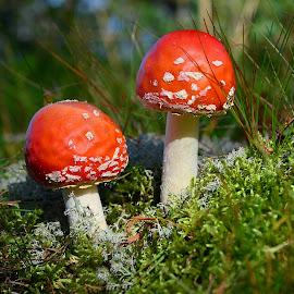 by Eugenija Seinauskiene - Nature Up Close Mushrooms & Fungi