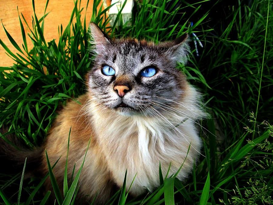 by Izvorul Muntelui Bicaz - Animals - Cats Portraits