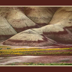 Painted HIlls by Launa Bodde - Landscapes Mountains & Hills